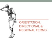 Orientation, Directional & Regional Terms Notes