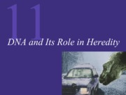 Chapter 11 DNA-Hereditary