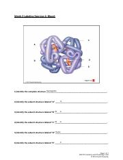 SU_BIO1014_W2_Blood_Lab_Labeling_Exercise_4_Flowers_R.pdf