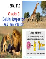 Chapter 9 - Respiration.ppt