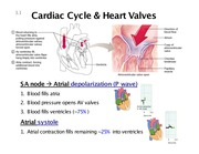 Lecture 3 Cardiac cycle heart sounds