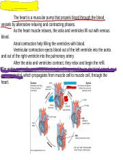 Electrophysiology of the heart.ppt