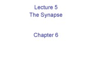 Lecture 5 The Synapse