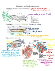 Respiratory and Circulatory systems Notes