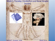Week 3  Session 1 Cerebellum, Basal nuclei.pdf