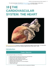 Chapter 19 - The Cardiovascular System - The Heart