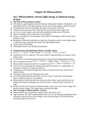 Chapter 10- Photosynthesis Notes