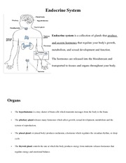 Endocrine System Notes
