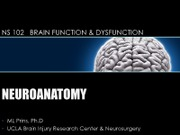 Lecture 15 - week 8 Thursday Brain Dysfunction Lecture
