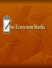 Ecosystem, cycles, succession.ppt