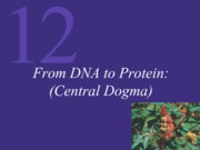 Chapter 12 DNA to Protien