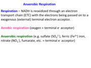 Lecture 13_Anaerobic respiration
