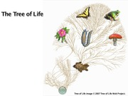 Lecture on The Tree of Life