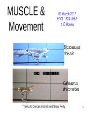 Muscle & Movement
