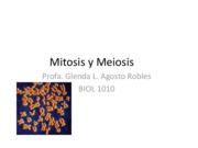 Presentation1 Mitosis y Meiosis english