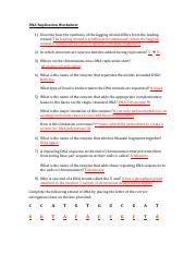 DNA Replication Worksheet Key - DNA Replication Worksheet 1 ...