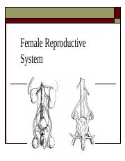 11-30 Female Reproductive System