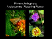 Angiosperms Fall 2011
