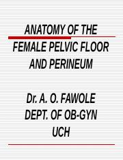 anatomy_of_pelvic_floor.ppt
