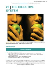 Chapter 23 - The Digestive System