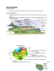 Chapter 4_Photosynthesis.docx