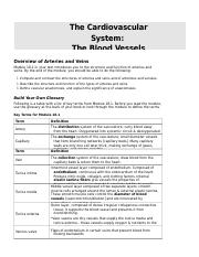 Blood Vessels & Circulation Worksheet.doc