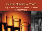 Genetic Mutation of Yeast (show)