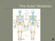 02b_Skeletal+System+-+Axial_Skeleton_Narrated-2