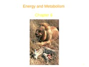 chapter 6 Energy and Metaboliwm powerpoint (1)