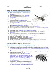 Insect WebQuest