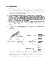 Bio 23 Unit 4 Part 1 The Skeletal System
