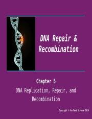 Lecture 9 - DNA Repair and Recombination.pptx