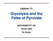 ZieglerLecture11-Glycolysis-PyruvateFates-ppt1