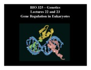 23Gene Regulation in Eukaryotes.ppt