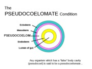 Lab Midterm Review--Pseudocoelomates
