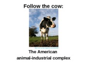 2_Follow_the_cow_2011
