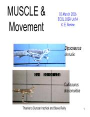 Lecture 15 - Muscle & Movement.pdf