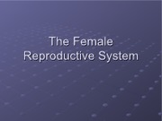 Female Reproductive System2