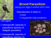brood parasitism