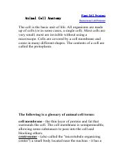 Animal Cell Anatomy.pdf