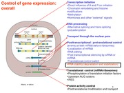 31 - RNA Processing; Transport from Nucleus & tRNA and rRNA Processing