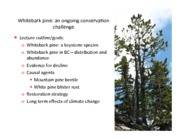 Lecture-9-Whitebark-pine-conservation