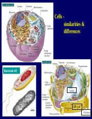 03 cells-organelles