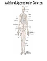 AP I Axial and Appendicular Skeleton_upload.pptx
