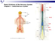 Lecture 12 - Organization of the Nervous System Bio416K Spring 2010
