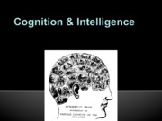 02 Cognition & Intelligence