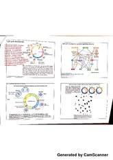 Cell cycle notes
