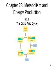 Chem 123-23 TCA Cycle
