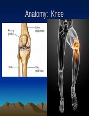 Knee without videos--Students (1)