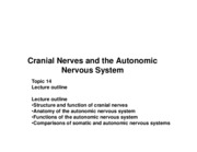 Topic 14 Cranial Nerves and ANS COMPLETE handout